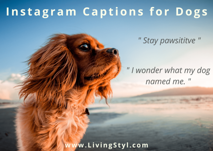 Instagram Captions for Dogs